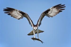 bird swooping in